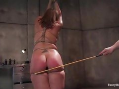 Tied up sex slave gets her butt plugged and ass whipped until it's raw